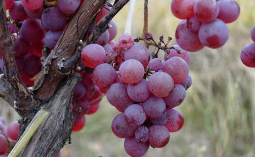 vino-DSCN1055